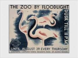 PDI00992-TRANSPORT-FOR-LONDON-the-zoo-by-floodlight.jpg