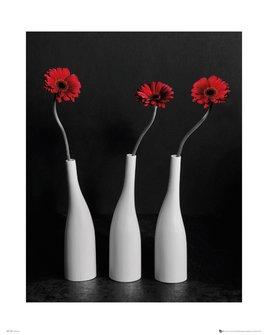 Flower Gerberas Bottles