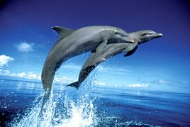 DOLPHINS leap