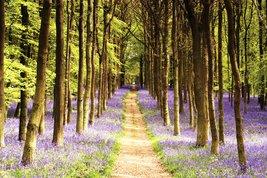 Woodland Path Maxi