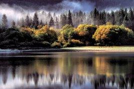 Forest - Autumn Lights