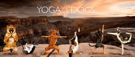 MG0115-YOGA-DOGS-canyon