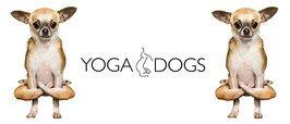 MG0114-YOGA-DOGS-folded-legs