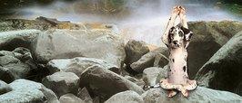MG0113-YOGA-DOGS-meditate