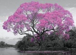 FL0552-TREE-blossom