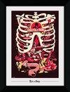 PFP0054-RICK-AND-MORTY-anatomy-park.jpg