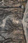 PH0542-ASSAF-FRANK-new-york-central-park.jpg