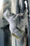 PH0560-BOB-LANGRISH-horse-snow.jpg