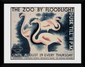 Pfc2906-transport-for-london-the-zoo-by-floodlight