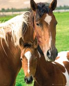 Mp1329-horses-mare-&-foal