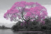 PH0501-TREE-blossom