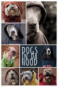 Gn0857-dogs-in-da-hood-dogs