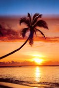 SUNSET & PALM TREE