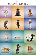 Yoga - Puppies