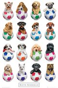 GN0803-KIMBERLIN-puppies-footballs