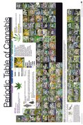GN0815-PERIODIC-TABLE-of-cannabis